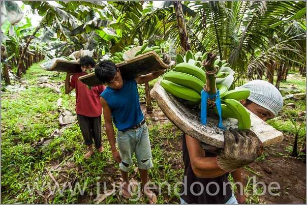 They create our wealth.  They work hard on the field for our luxury. In this case harvesting organically grown bananas.